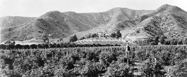 Cahuenga Valley near present-day West Hollywood, circa 1905. Courtesy of the Title Insurance and Trust / C.C. Pierce Photography Collection, USC Libraries.