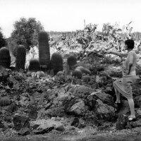 A woman admires the cactus garden at the California Botanic Garden in Mandeville Canyon, 1928. Courtesy of the Photo Collection, Los Angeles Public Library.