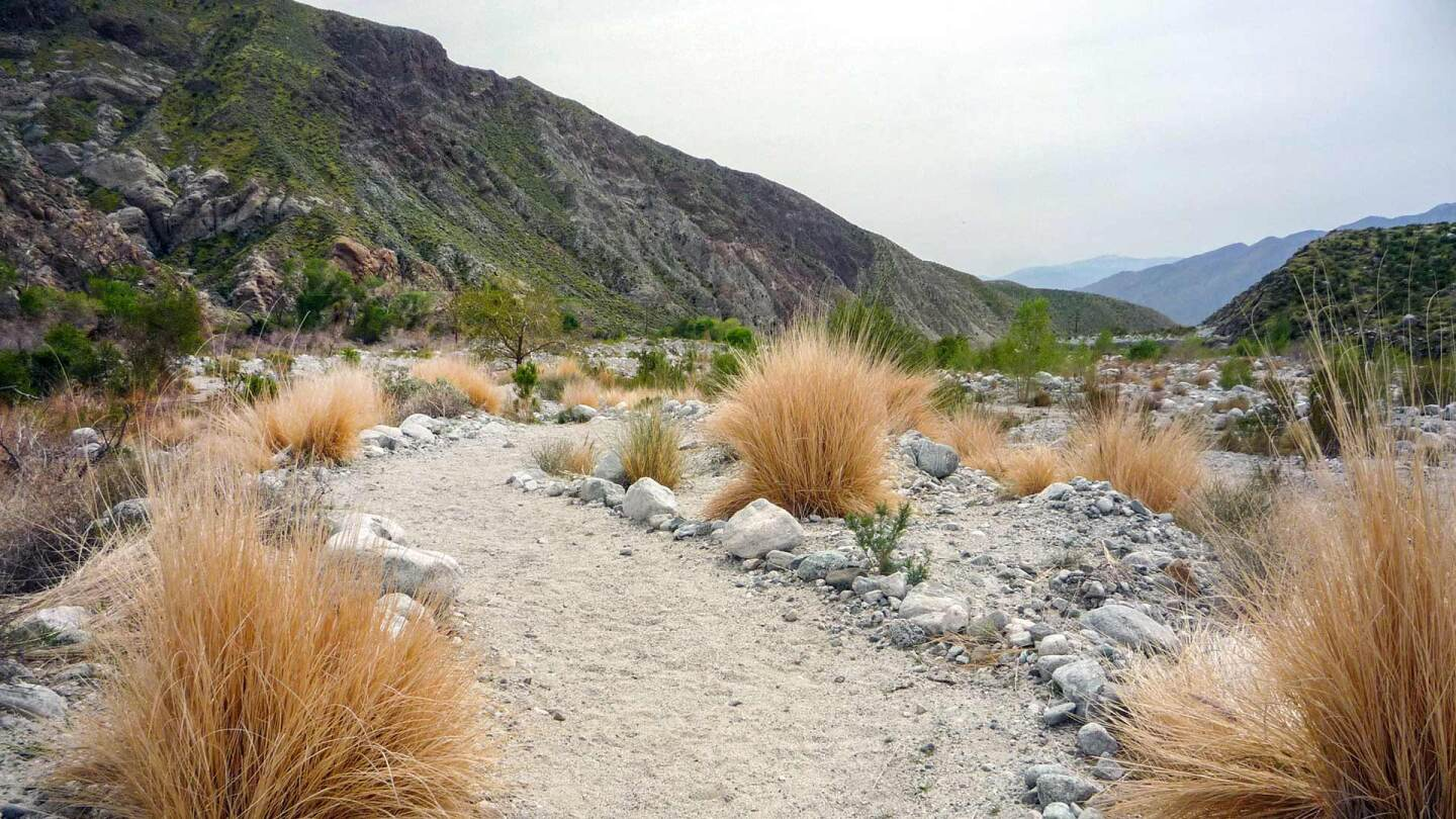 Trail at Whitewater Preserve