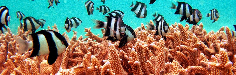Damselfishon a reefin the Maldives| Photo: Sleepy Chinchilla, some rights reserved