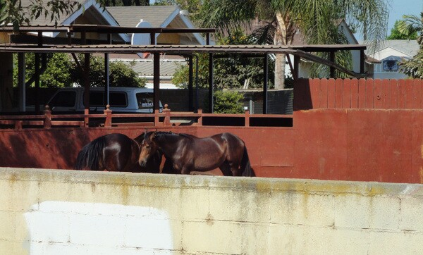 Horses in the back-thumb-600x362-55399