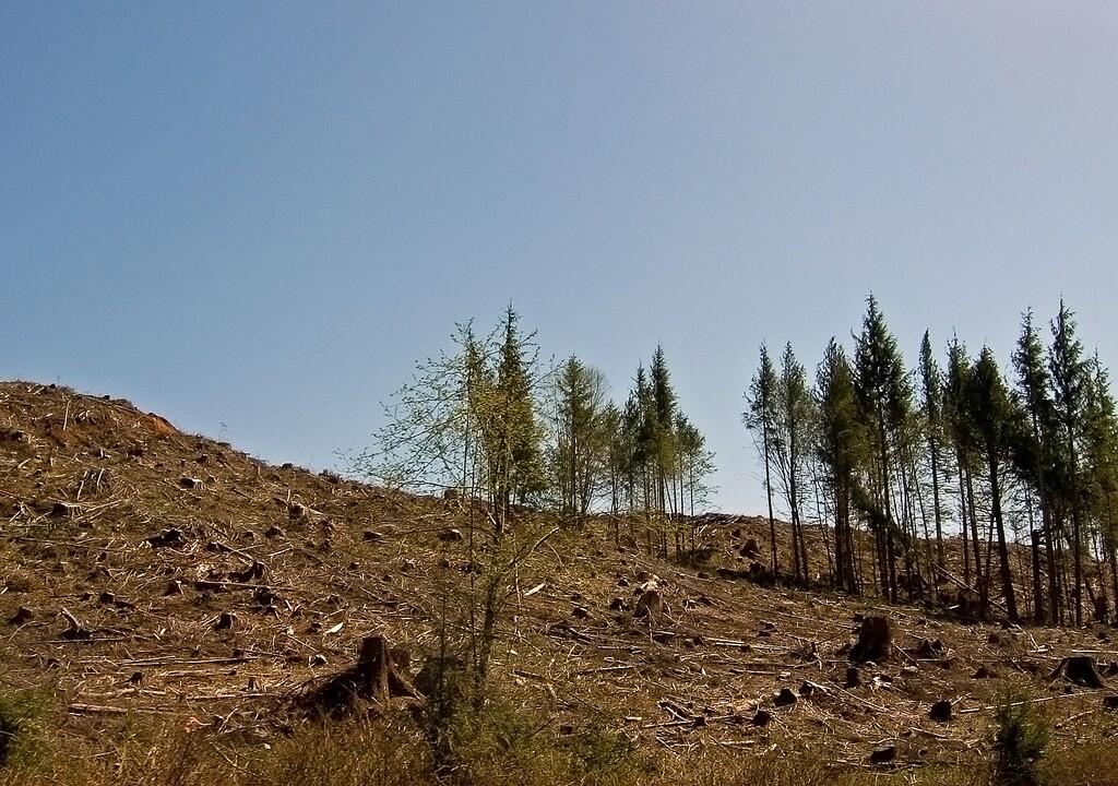 habitat-clearcut-4-19-16.jpg