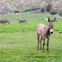 donkey-moreno-valley-1-30-15-thumb-630x420-87406