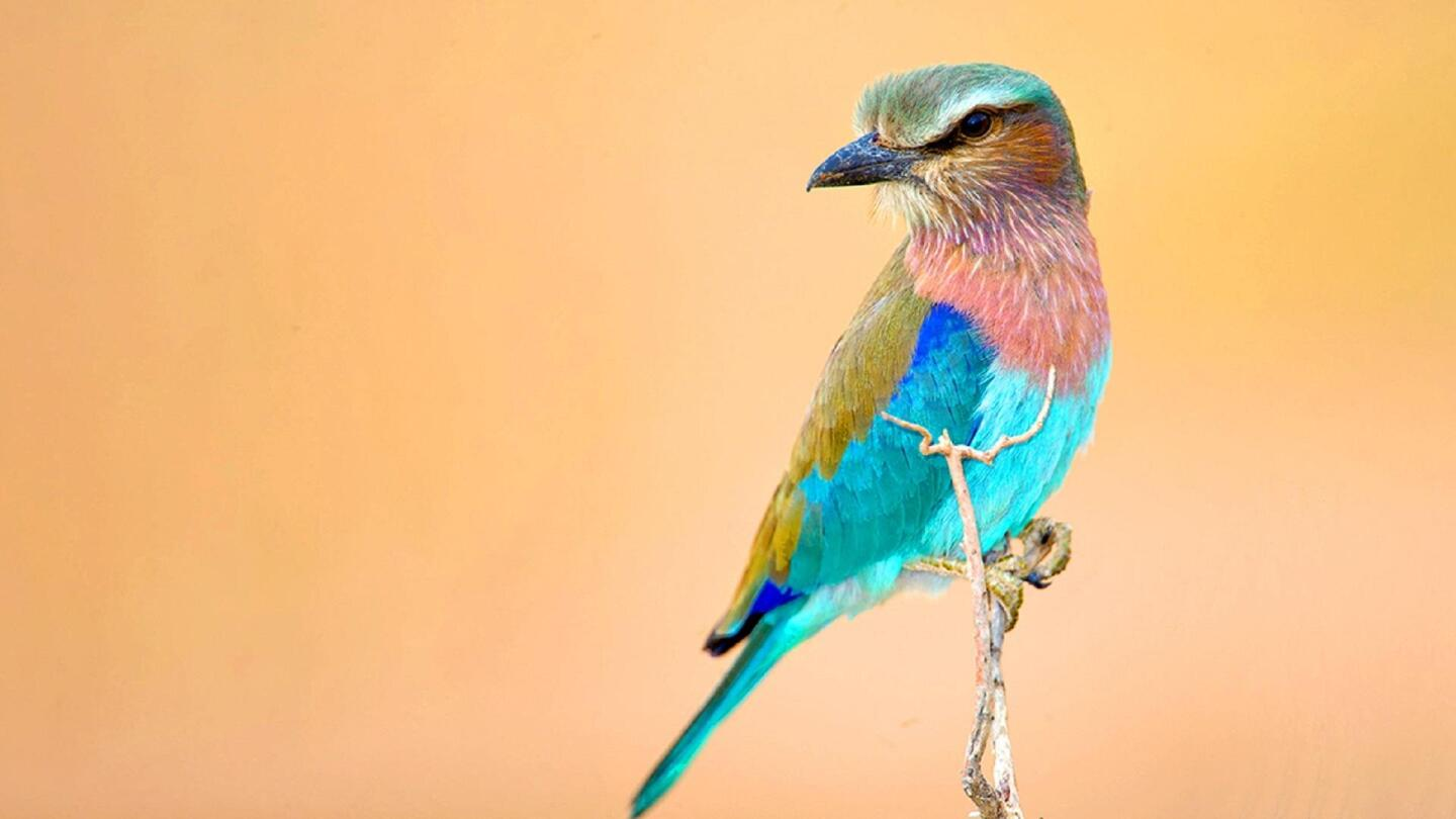 """A closeup image of a colorful East African bird in """"To the Ends of the Earth: Birds of East Africa."""""""