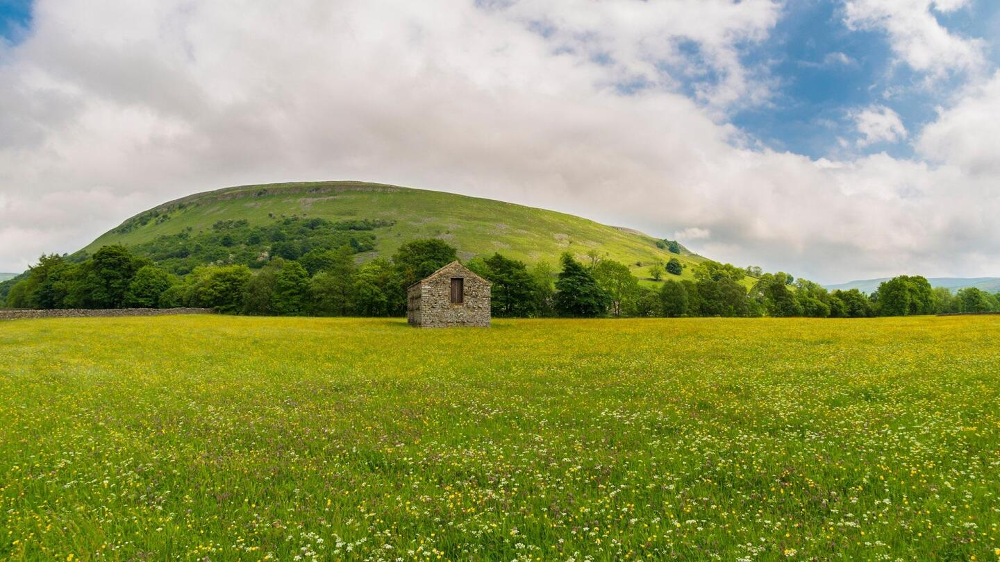 """A vast meadow with a lone building made of stone in the middle of it.   """"Plants Behaving Badly: Sex and Lies"""""""