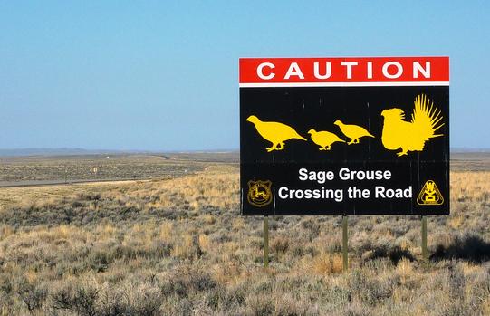 sage-grouse-7-17-14-thumb-600x387-77659