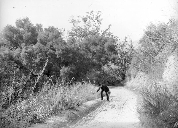 A man gathers wildflowers along a road in Griffith Park, circa 1900. Courtesy of the Los Angeles Area Chamber of Commerce Collection, USC Libraries.