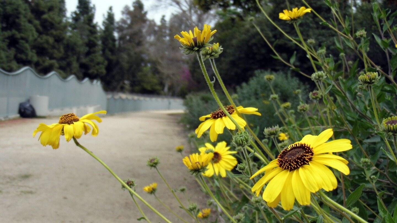 Wildflowers along Valleyheart Greenway.   Sandi Hemmerlein