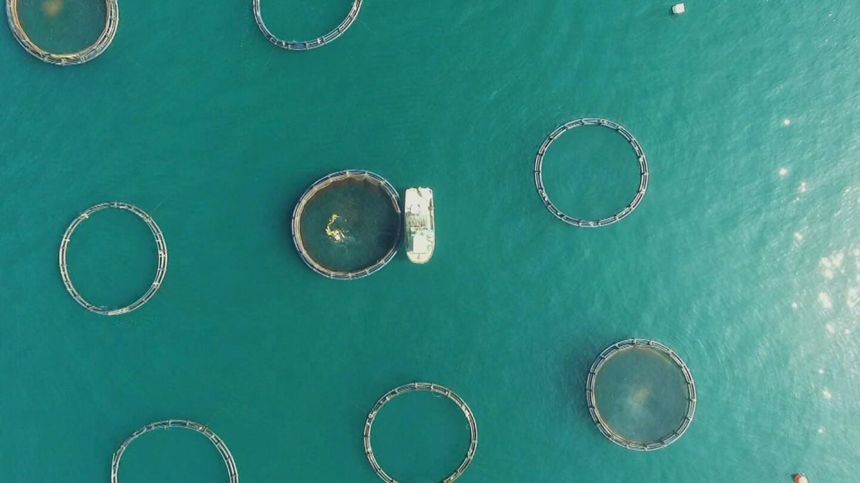 Aerial view of open-ocean fish farm. | Earth Focus