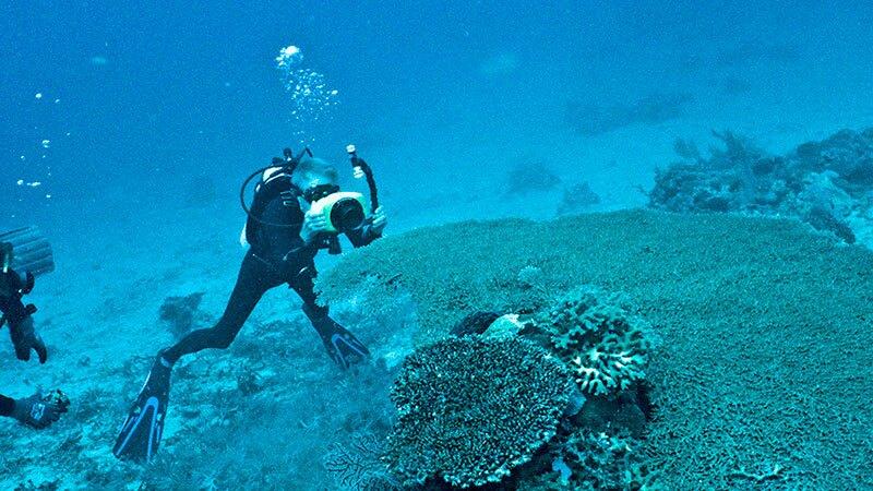 Phil Dustan examines a reef | Photo courtesy Phil Dustan