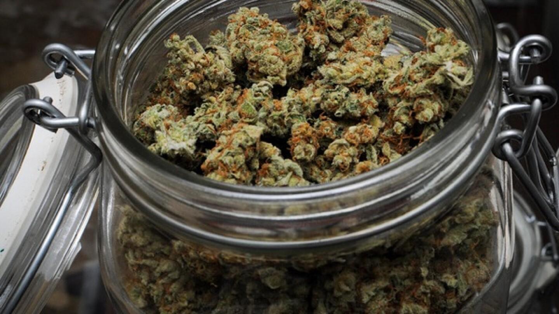 prop-d-marijuana-los-angeles-2013-ballot