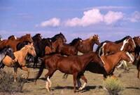horse-group.jpg