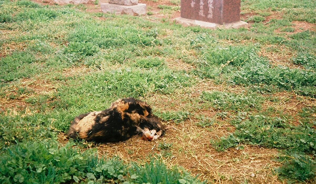 Dead cat | Chase Alexander