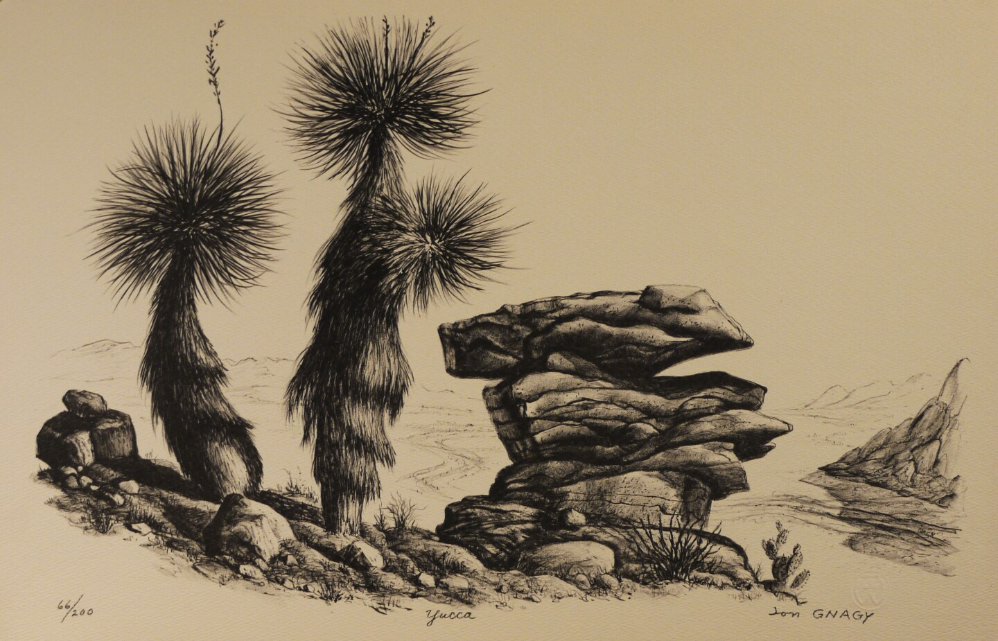 A sketch by Jon Gnagy depicting yucca plants and a pile of rocks. It is in black and white.