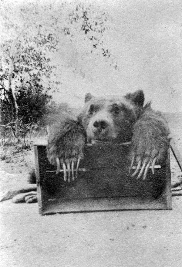 Former game warden W.E. Ed Adkinson killed Southern California's last grizzly bear in Orange County on February 26, 1908. Courtesy of the Orange County Public Library Local History Collection.