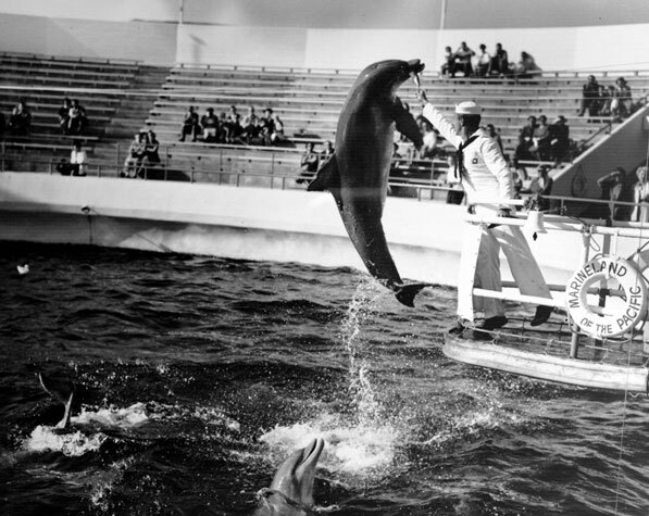 A dolpin performing a stunt at Marineland of the Pacific, 1954. Courtesy of the Dick Whittington Photography Collection, USC Libraries.