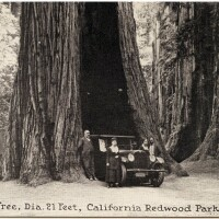 The Auto Tree at California State Redwood Park