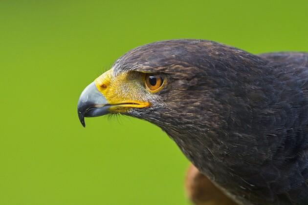 eagle-wind-4-2-15-thumb-630x420-90427