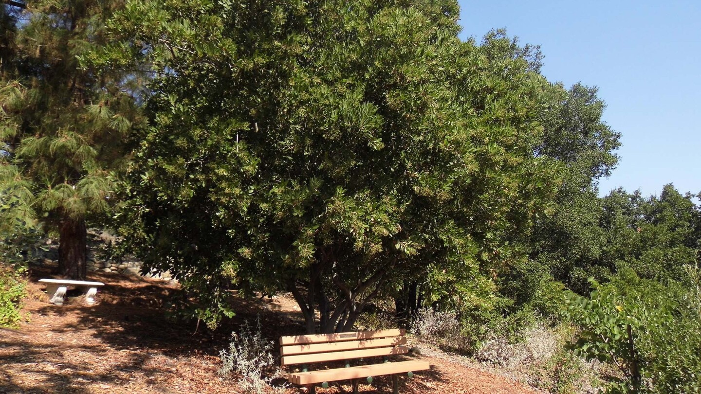 The Conejo Valley Botanic Garden nature trail | Sandi Hemmerlein