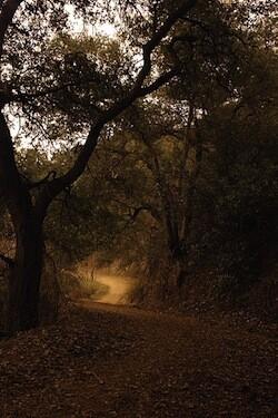 A Griffith Park trail.