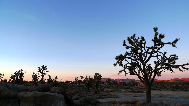 Cima Dome sunset