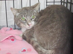 Amigo the cat is now recuperating. | Photo: Courtesy L.A. County