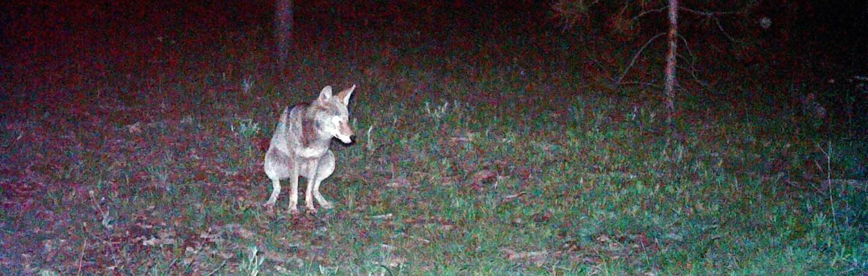 coyote-poop-banner-6-30-16.jpg