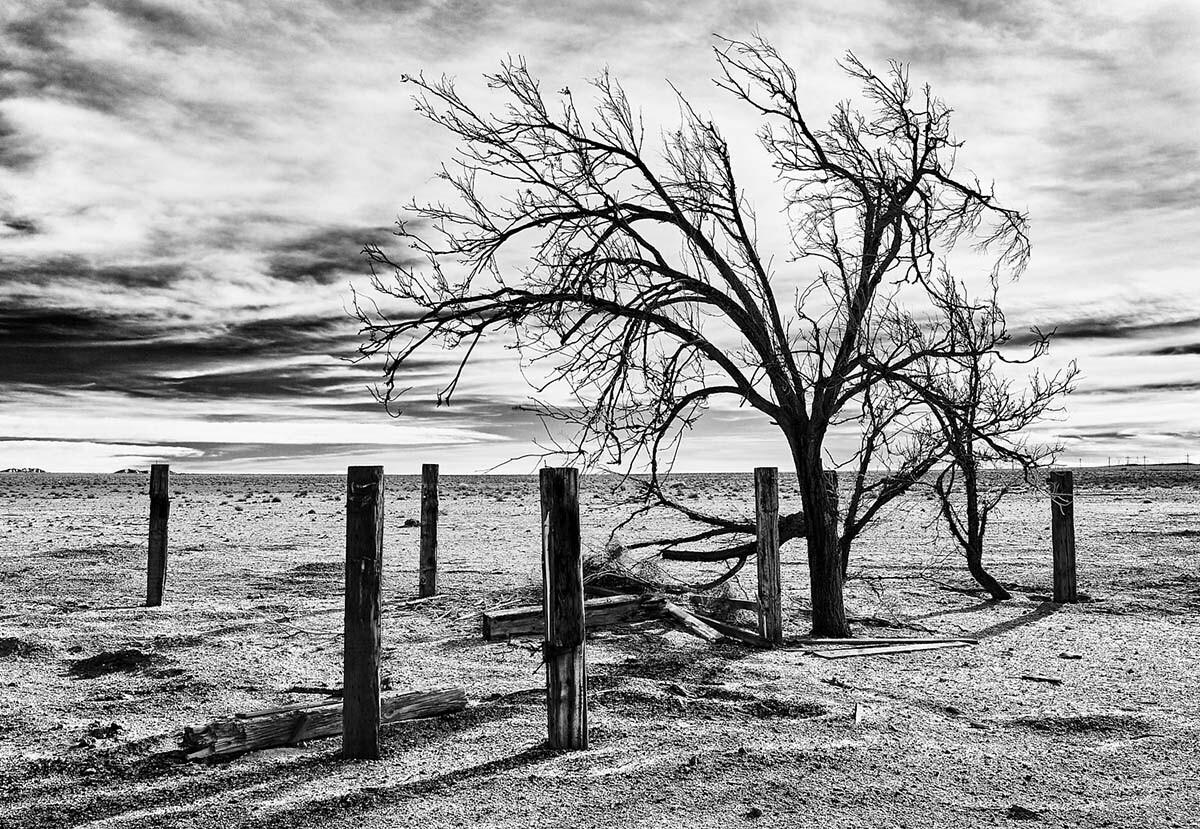 Lone Tree & Posts - Infrared Exposure - Cinco, CA - 2012  | Osceola Refetoff