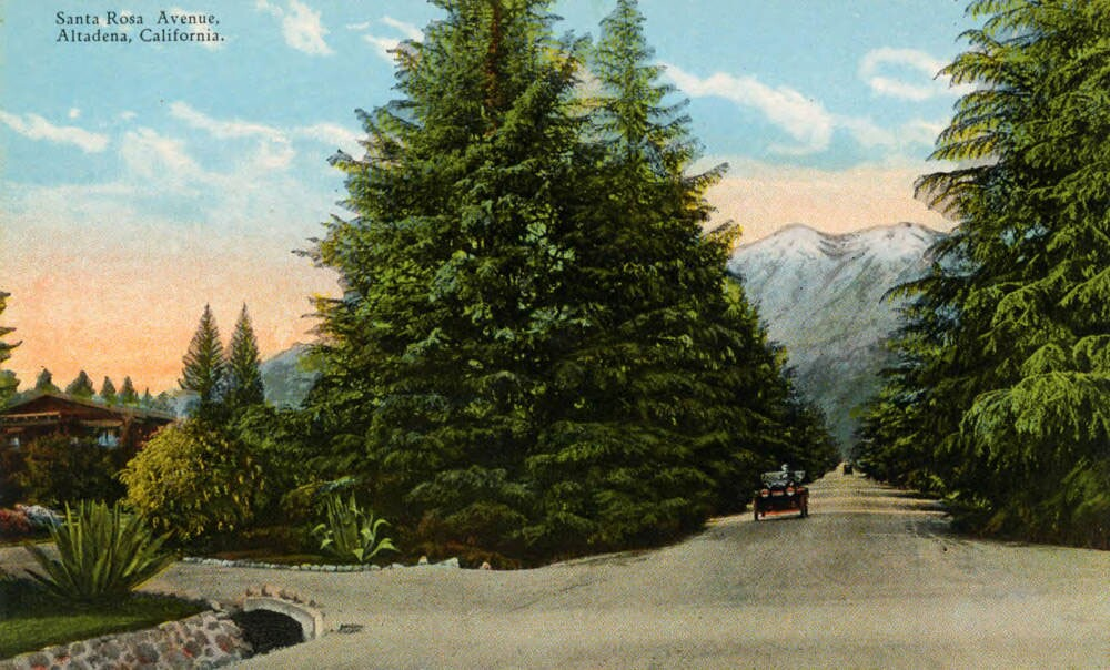 Altadena's Santa Rose Avenue, perhaps before it had become Christmas Tree Lane. Courtesy of the Pasadena Public Library.