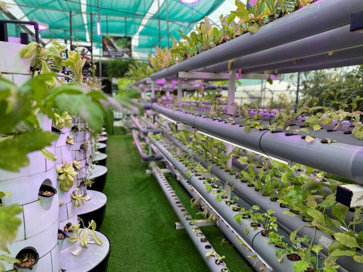 General view of a high tech vertical farm where local farmers have a chance to cultivate their crops, despite the nationwide lockdown due to the coronavirus disease (COVID-19) outbreak, in Sharjah, United Arab Emirates April 13, 2020. REUTERS