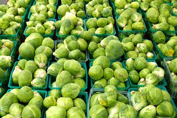 Rows of Brussels sprouts