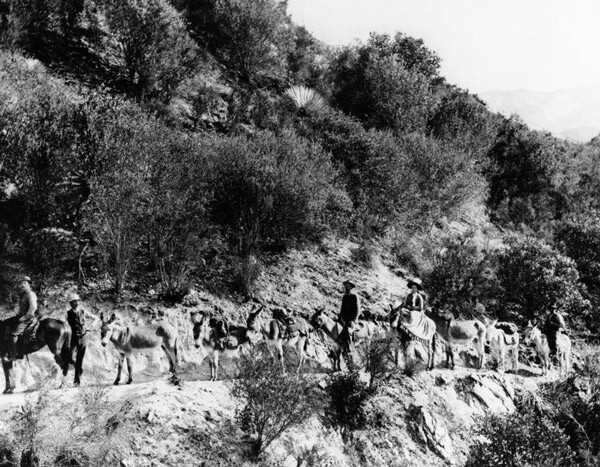 A mule train bound for Switzer's Camp in the Arroyo Seco, circa 1905. Courtesy of the Photo Collection, Los Angeles Public Library.