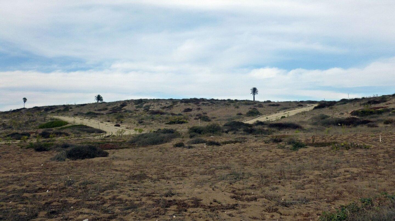 abandones roads in the el segundo dunes