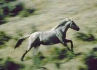 horse-gallop.jpg