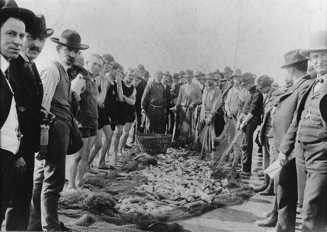 Day's catch at Belmont Shore, Long Beach, California, ca. 1900. | California State Library