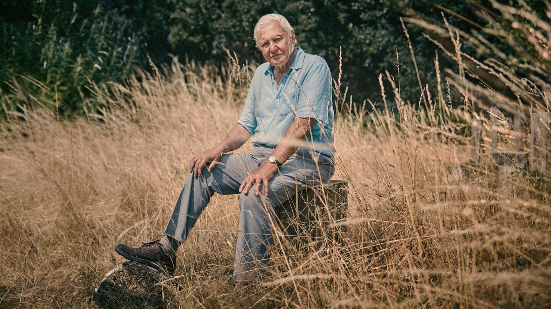 Sir David Attenborough sits on a tree stump.