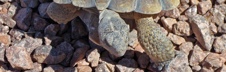 tortoise-banner-11-16-16.jpg