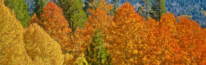 leaves-tahoe-banner-9-10-16.jpg
