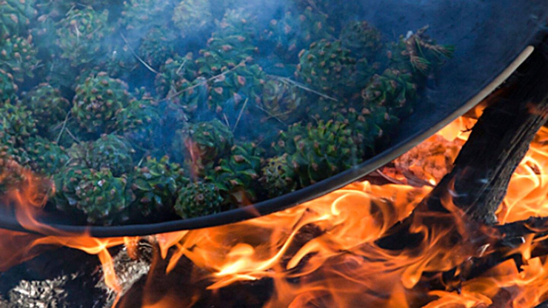 Pinyon pine cones roasting