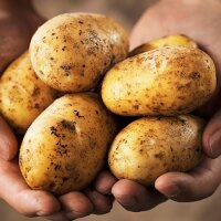 A handful of potatoes