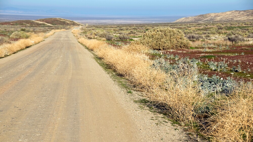 A roadside patch of buckwheat   Photo: Phil Augustavo/iStockPhoto