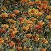 south-coast-botanical-garden-sw