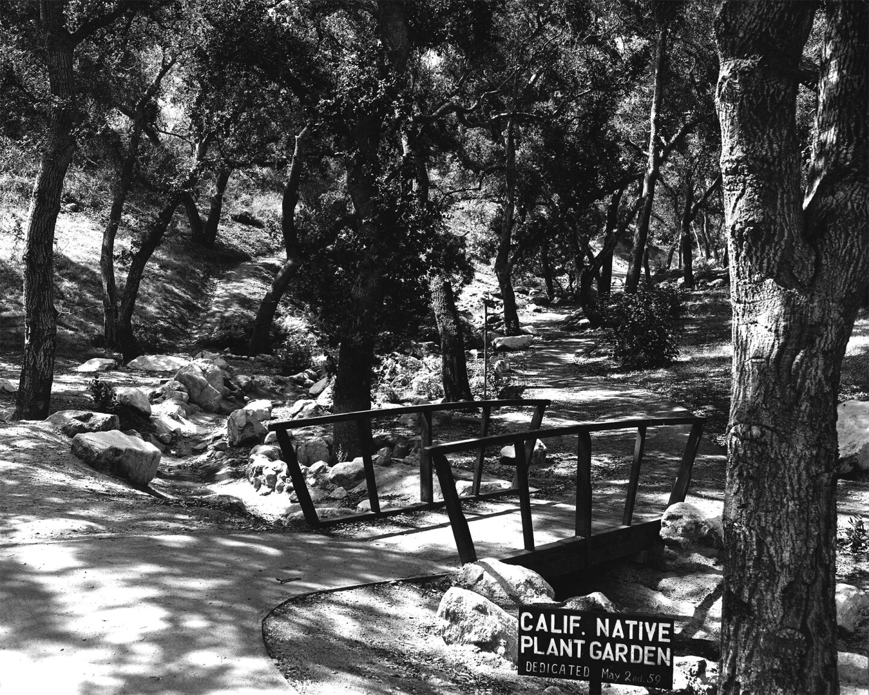 The California Native Plant Garden at Descanso Gardens