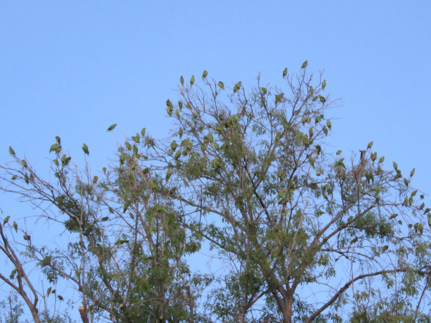 Dozens of parrots perched on a tree. | Ursula K. Heise