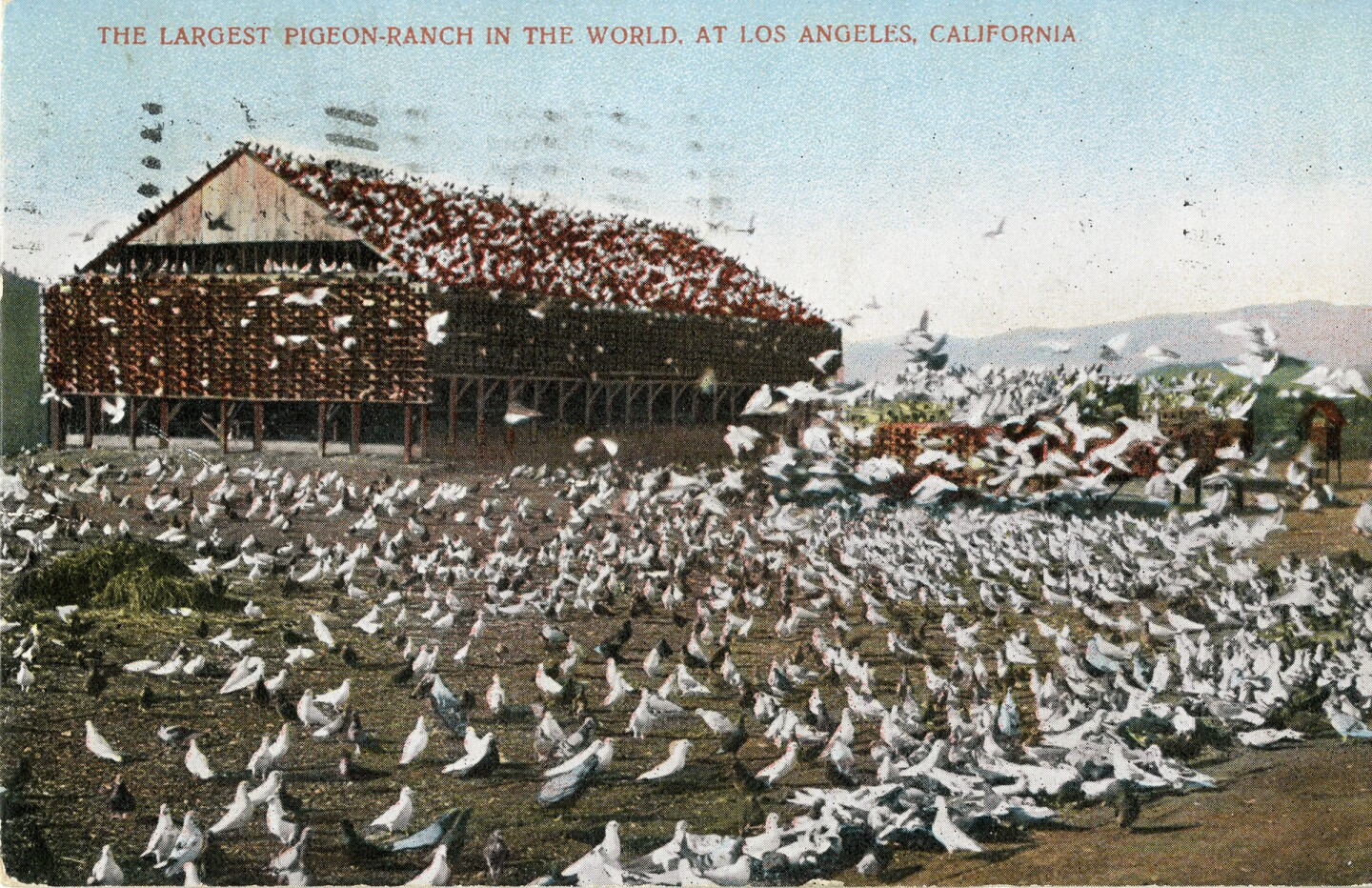 Largest Pigeon-Ranch in the World, at Los Angeles, California