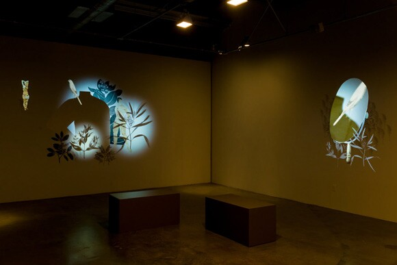 Stas Orlovski, Chimera, Installation view, Don Milici