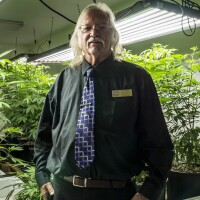 "Adelanto councilman John ""Bug"" Woodard pictured with a local grower's ""mother trees"" that will be later cloned for large-scale marijuana cultivation. (featured)"