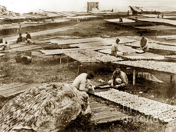 Black and white photo of Chinese squid fishermen drying out squid in Monterey, California.