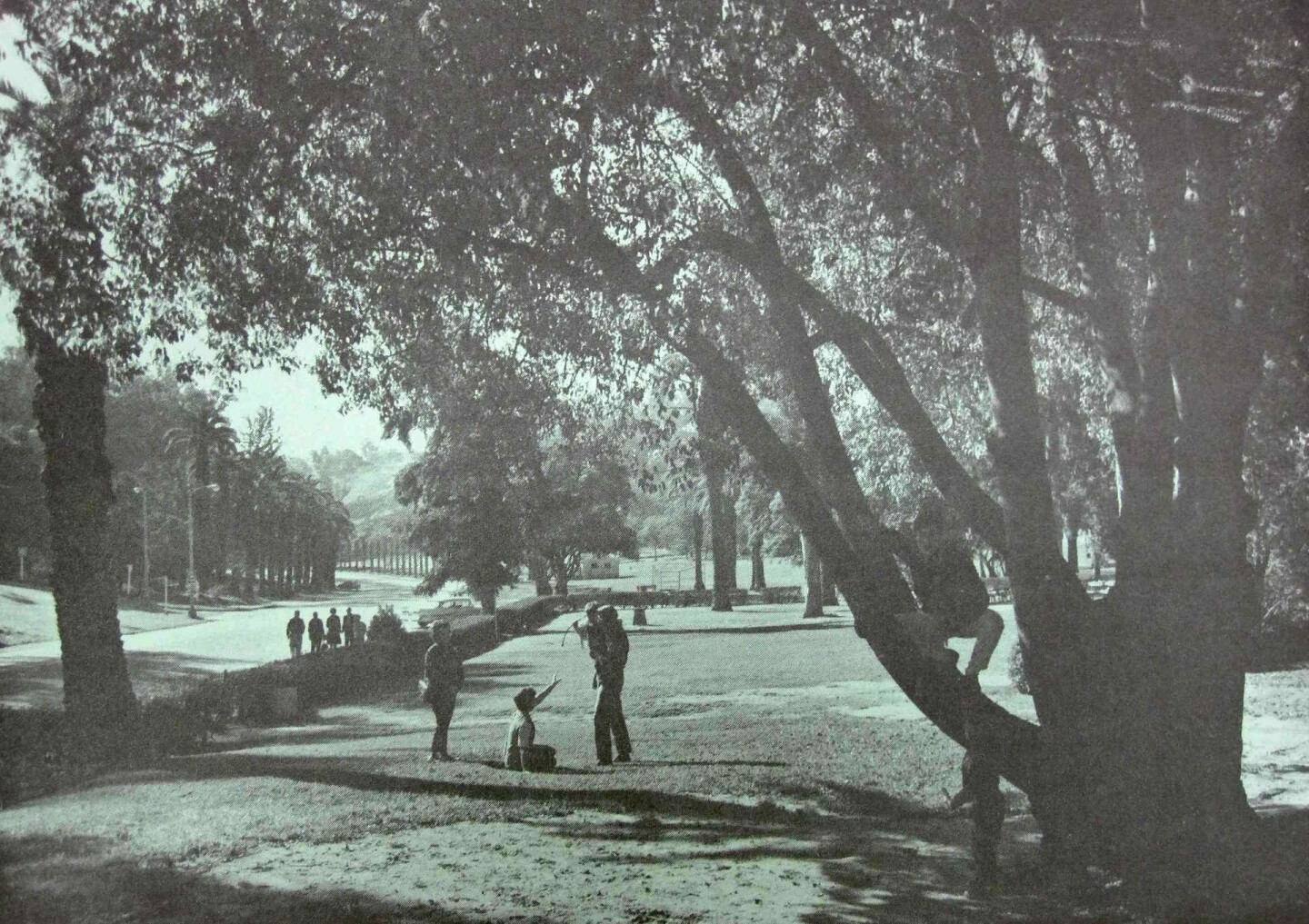 Photograph of Elysian Park, showing area that would have be destroyed by the convention center, including the historic Avenue of the Palms.