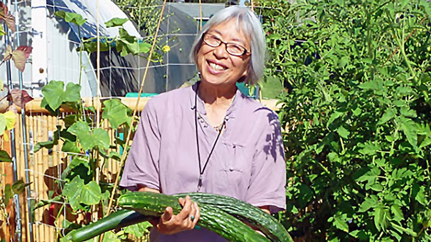 Florence Nishida, a woman in a purple top and short grey hair holds a bunch of cucumbers in a garden.